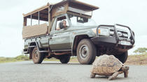 Hluhluwe Game Drive - Full day with lunch, Durban, Cultural Tours