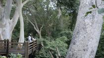 uMkhuze Fig Forest Walk, Durban, Cultural Tours