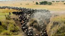 6 Days Masai Mara, Lake Nakuru & Amboseli Safaris, Nairobi, Cultural Tours
