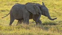 7 Days AMboseli , Lake Naivasha Lake Nakuru , Masai Mara 2018 safari, Nairobi, Cultural Tours