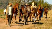 Horse Trails - 2 hour Bush and Mountain Trail in Hazyview, Kruger National Park, 4WD, ATV &...