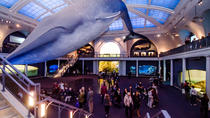 Tour ribelle dell'American Museum of Natural History, New York, Biglietti e pass per musei