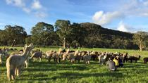 Alpaca Farm 2 hour tour, Adelaide, 4WD, ATV & Off-Road Tours