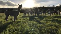 Alpaca Farm Day tour, Adelaide, 4WD, ATV & Off-Road Tours