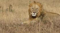 Lake Nakuru National Park - Full Day Tour, Nairobi, Full-day Tours
