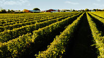Full-Day Niagara Winery Tour from Toronto, Toronto, Wine Tasting & Winery Tours
