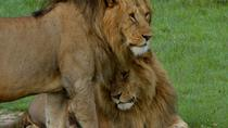 Africa's Leading Wildlife Game Reserve - Masai Mara, Nairobi, Cultural Tours