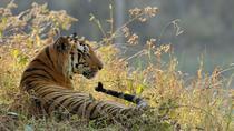 Kanha Tiger Reserve expedition from Jabalpur Airport, Madhya Pradesh, 4WD, ATV & Off-Road Tours