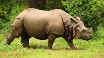 Rhino and Tiger Safari in Kaziranga India, Guwahati, Multi-day Tours