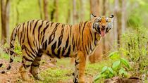 Tadoba Tiger Reserve Tour Of India, Maharashtra, 4WD, ATV & Off-Road Tours