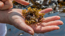 Irish Seaweed Foraging Tour and Seaweed Inspired Cooking Class in a Local's Home, Waterford