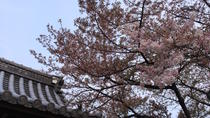 Private Cherry Blossoms in Takayama with Shopping and Cookery Lesson, Nagoya, Cooking Classes