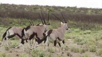 14 days extraordinary safari Botswana, Maun, 4WD, ATV & Off-Road Tours