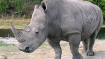 3 Days Rhino Adventure, Maun, 4WD, ATV & Off-Road Tours