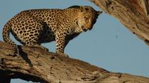 8 days Over-landing Safari In Botswana, Maun, 4WD, ATV & Off-Road Tours