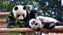 10-Day Best of China with Pandas Private Tour: Beijing, Xian, Chengdu and Shanghai, Beijing, ...