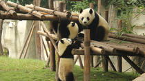 Small Group Chengdu Day Tour:Chengdu Research Base of Giant Panda Breeding-Jinli Street-Kuanzhai...