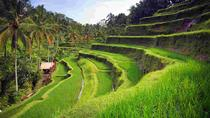 WONDERFUL TANAH LOT AND RICE TERRACE WITH TRIDATU BALI TOURS, Ubud, Ports of Call Tours