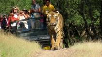 7 Days Golden Triangle with Ranthambore and Pushkar tour From Delhi, New Delhi, Multi-day Tours