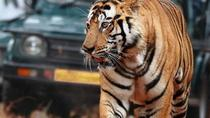 6-Day Golden Triangle Private Tour from Delhi with Ranthambore, Mumbai, Multi-day Tours