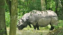 6-Day Tour of Exotic Northeast India: Mawsmai Caves, Double Decker Living Root Bridge and Kaziranga ...