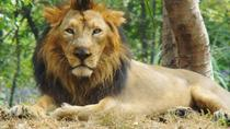 6-Day Wildlife Tour of Gujarat from Ahmedabad, Ahmedabad