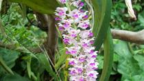 8-Night Adventure Tour of Northeast India: Wild Orchids Valleys and Snow-capped Mountains from...