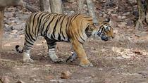 Panna National Park Day Trip from Khajuraho , Madhya Pradesh, Full-day Tours