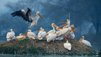 Private Day Trip to Keoladeo Bird Sanctuary and Chand Baori Stepwell Including Lunch and Gala ...