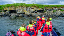 Express Small-Group Puffin and Bird Watching Tour from Reykjavik, Reykjavik, Nature & Wildlife