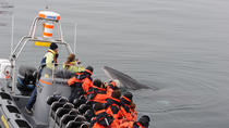 Small-Group Reykjavik RIB Whale Watching Cruise, Reykjavik, Food Tours