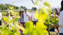 Winery Experience for 3 or more people, Arezzo, Wine Tasting & Winery Tours