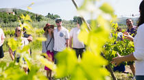 Winery Experience for Two, Arezzo, Wine Tasting & Winery Tours