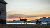 Small-group Arctic Landscapes Sightseeing Tour from Tromso - Winter, Tromso, Day Trips