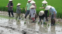 Agricultural Tour in Hoi An, Hoi An, Private Sightseeing Tours