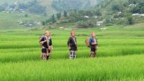 Half-Day Sapa Rice Fields Walking Tour, Hanoi, Half-day Tours