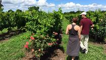Montevideo Wine Tour, Montevideo, Wine Tasting & Winery Tours
