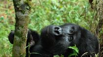 4 Days Flying Gorilla Safari From Uganda , Kampala, Multi-day Tours