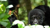 5 Days Rwanda Uganda Gorilla Tour, Kigali, Multi-day Tours