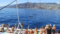Delfin- und Walbeobachtungs-Bootstour auf Katamaran ab Funchal, Funchal, Dolphin & Whale Watching