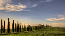 Private Tour: Medieval Val d'Orcia by Minivan from Florence, Florence, Private Day Trips