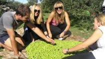 Private Tour: Olive Picking in Solta Island with Lunch , Split, Day Trips