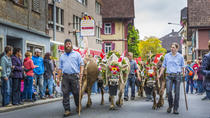 Swiss Cow Parade - Alpine Festival, Lucerne, Cultural Tours
