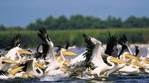 3-Day Small-Group Tour in the Wild Danube Delta, Bucharest, Multi-day Tours