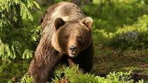 Full Day Tour of Dracula's, LiBEARty Brown Bear Sanctuary, Brasov town and Rasnov Fortress, ...