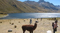 Querococh Lake and Chavin Ruins and from Huaraz, Huaraz, Full-day Tours