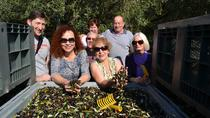 7-Day Abruzzo Cookery Tour: Cooking Classes Wine Tasting and Olive harvest, Pescara, Wine Tasting &...