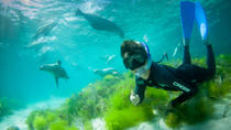 Half-Day Sea Lion Snorkeling Tour from Port Lincoln, Port Lincoln, Snorkeling