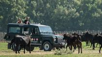 Safari de 3 h en 4x4 por la Camarga desde Le Grau-du Roi, Le Grau-du-Roi, Kid Friendly Tours & Activities