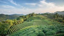 Private Tea Picking Day Trip at Hangzhou Dragon Well Tea Village with Lunch, Hangzhou, Cultural ...